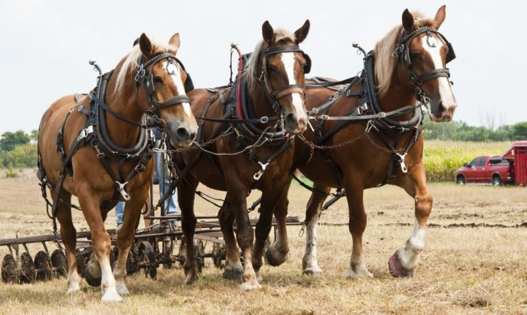 Draft horses are bred to pull heavy loads – just like white papers.